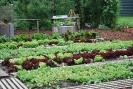 2013-06-04 Die City Farm Schönbrunn